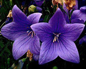 """purple,"" by Janice Taylor, Anti-Gravity Coach, Positarian, Author, Artist"