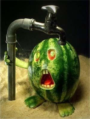 melon man2.jpg