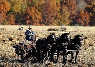 AmishFarmer.jpg