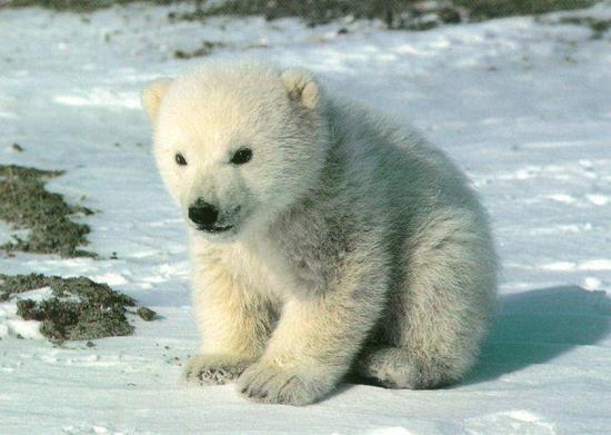 polar baby.jpg
