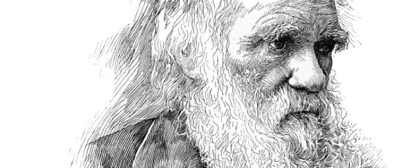 Darwin_head.jpg