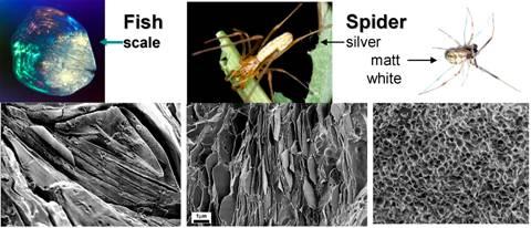 spider-fish-scales.jpg