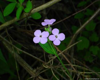 flowers_007_1280.jpg
