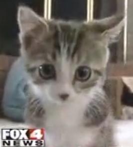 Amazing Grace Kitten