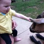 This toddler hugs baby goats