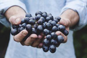 grape-fruit-hold