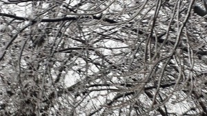 icy winter branches