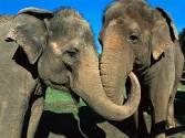 shirley and jenny elephants2