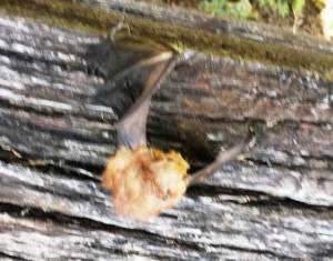 dead bat 2
