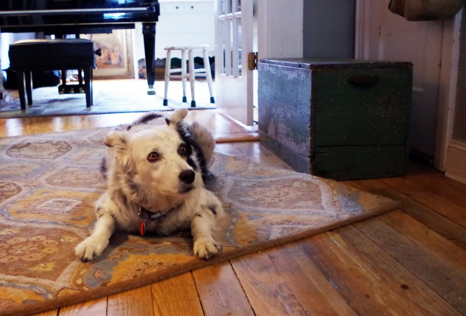 Chaser Lies In Waiting - Dan Nosowitz