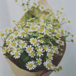 daisies_bouquet