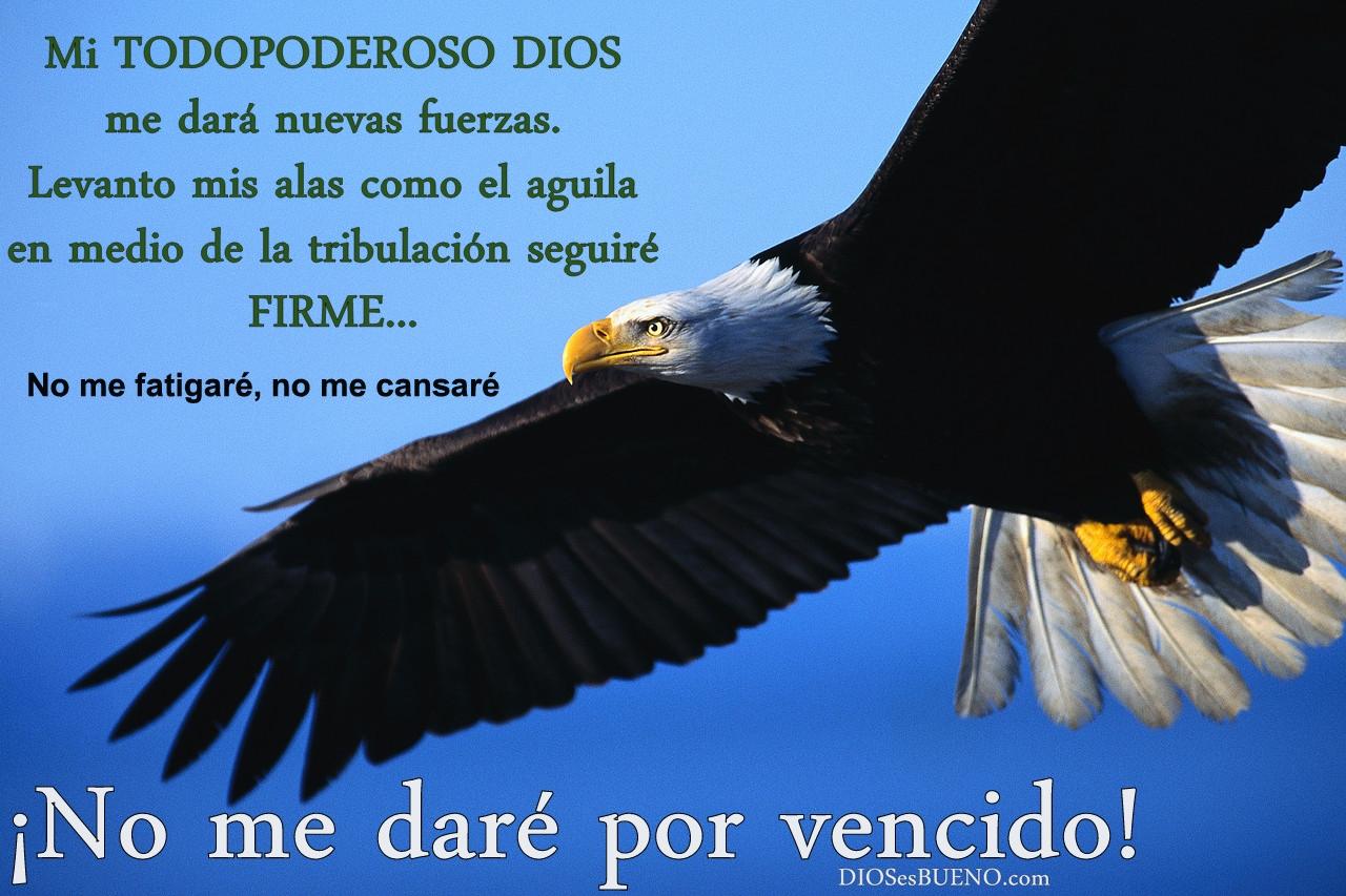 ... águilas, correrán, y no se cansarán, caminarán, y no se fatigarán