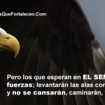 Aguila portada timeline cover perfil facebook 1
