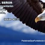 Aguila portada timeline cover perfil facebook 4