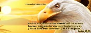 Aguila portada timeline cover perfil facebook  6