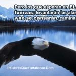 Aguila portada timeline cover perfil facebook  8