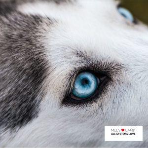 wolf mels lovealand eye full moon