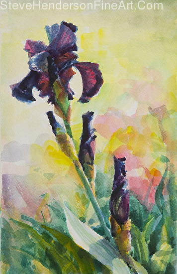 Purple Iris inspirational original watercolor painting by Steve Henderson, licensed prints at light in the box and framed canvas art.