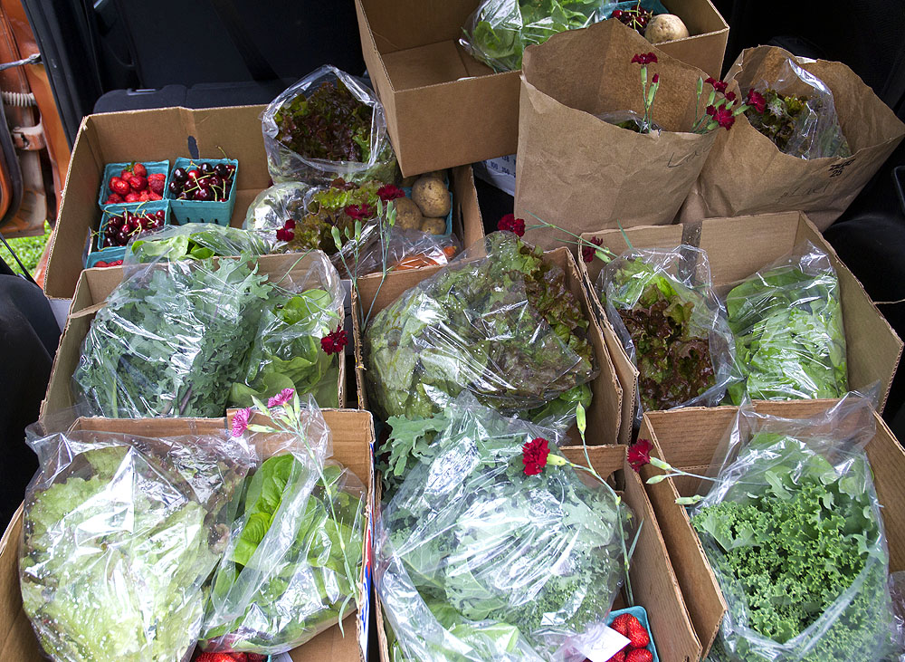 Produce from Deer Pond Gardens