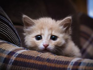 stressed out cats | Terezia Farkas | depression help \ Beliefnet