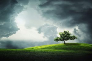 patience | Terezia Farkas | Beliefnet | emotional health