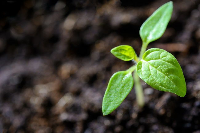 agriculture-close-up-cultivation-1002703