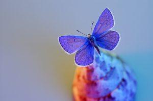 butterfly by Anatoli Styf