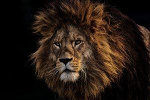 animal-animal-photography-animal-portrait-2220337