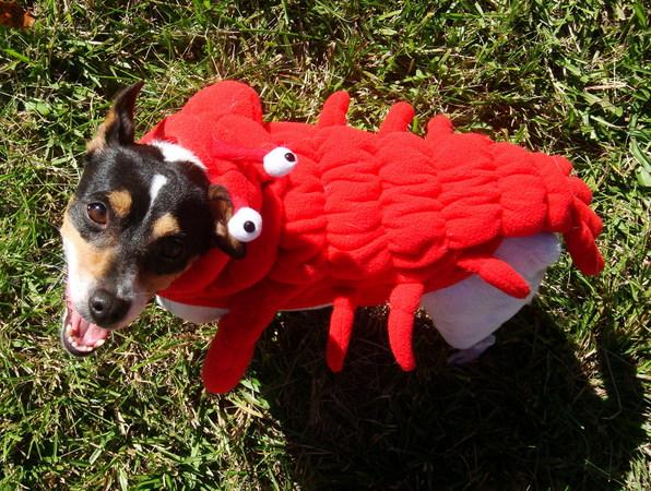 crawfishdog.jpg