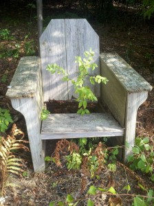 - throne Rye NH
