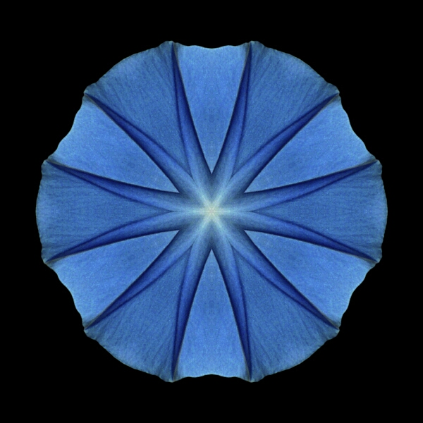 Blue_Morning_Glory_II.jpg