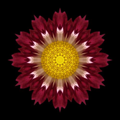 Spoon Chrysanthemum I.jpg