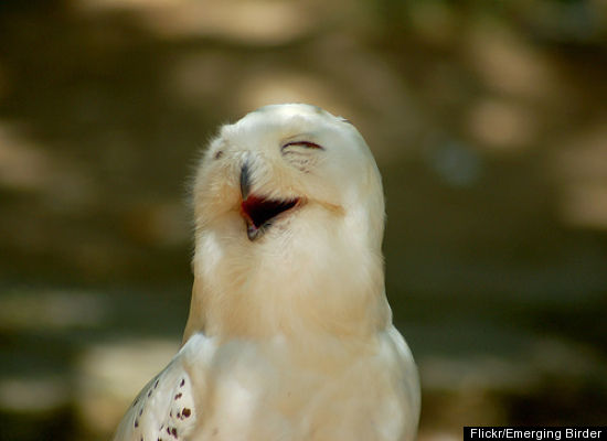 SmilingBird.jpg
