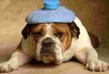 hangover_dog.jpg