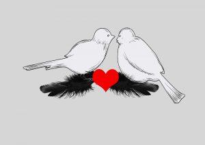 birds-2417167_960_720