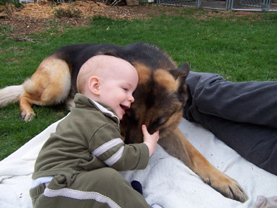 GSD_and_a_baby