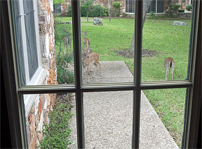 deer-office-window-4.jpg
